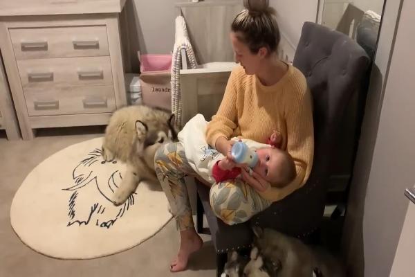 Phil il cane protegge la sorellina umana per tutto il giorno (VIDEO)