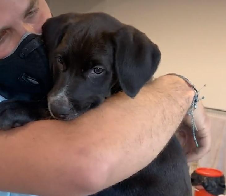 pi cagnolina 4 mesi adozione
