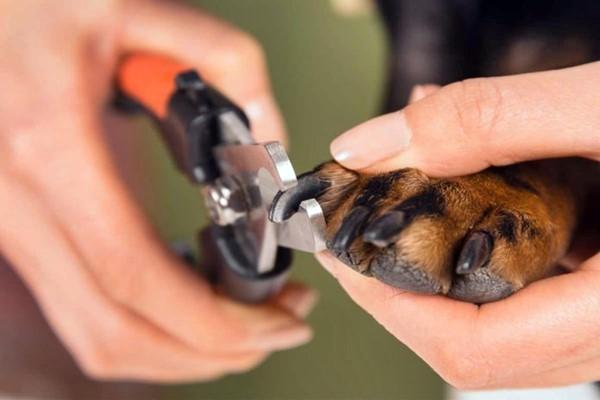 tagliare le unghie del cane