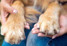 mani umane che tengono le zampe del cane