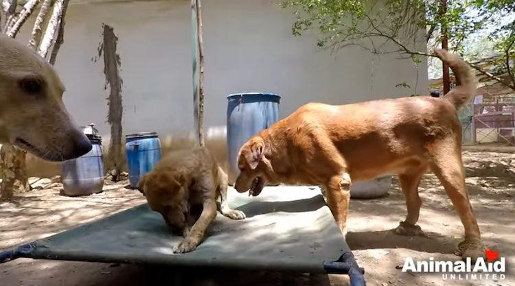 pumbaa amicizia cani