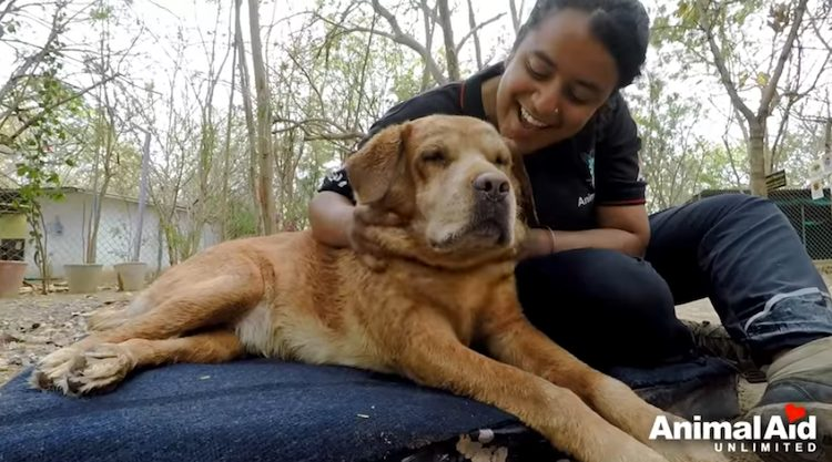 salvataggio cane disabilità