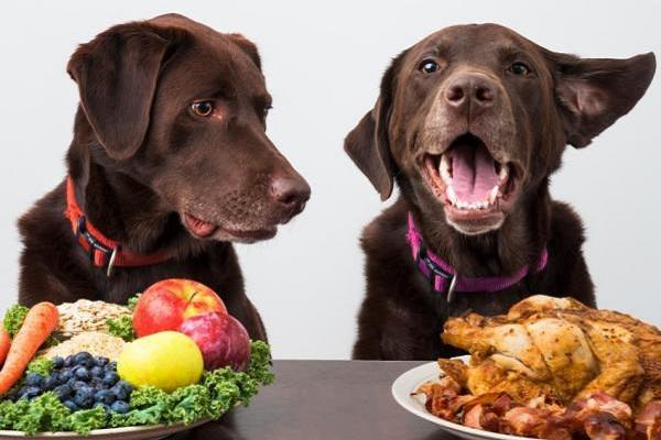 alimenti per cani a confronto