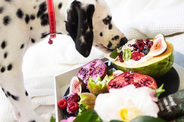 cane, frutta e verdura