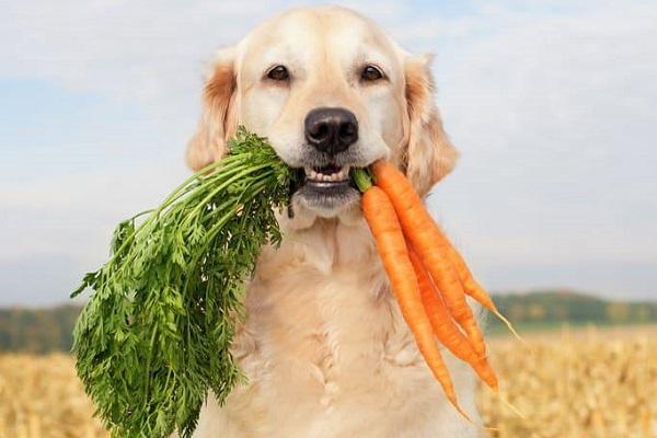 cane e carote