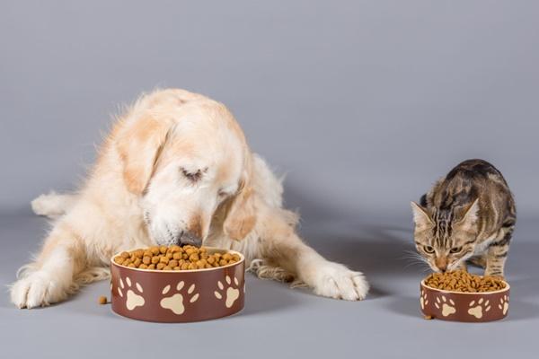 cane e gatto che mangiano crocchette