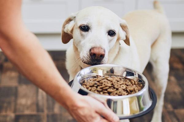 cane non vuole mangiare