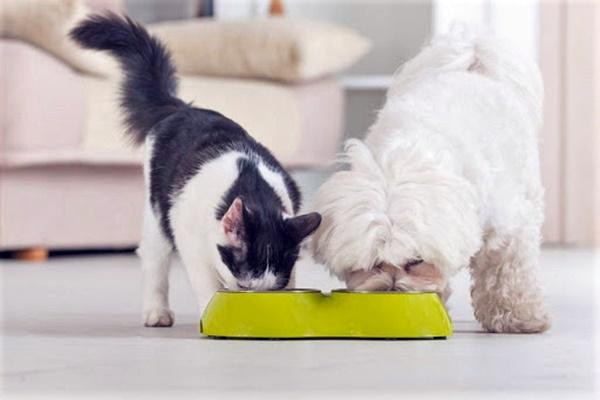 ciotola per il cane e il gatto