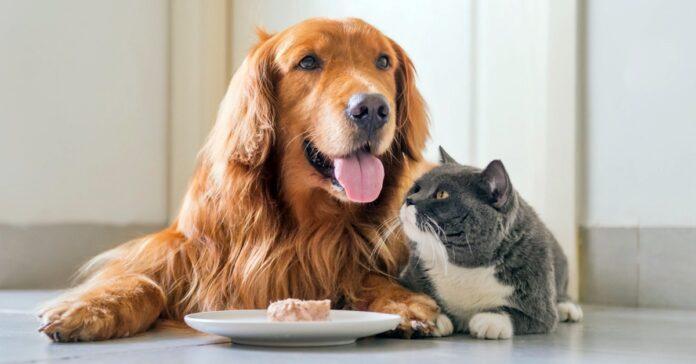gatto e cane mangiano insieme