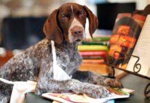 cane che cucina