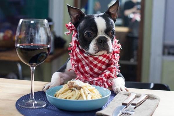 20 ricette per cani veloci e deliziose: i pasti migliori per il nostro amico Fido