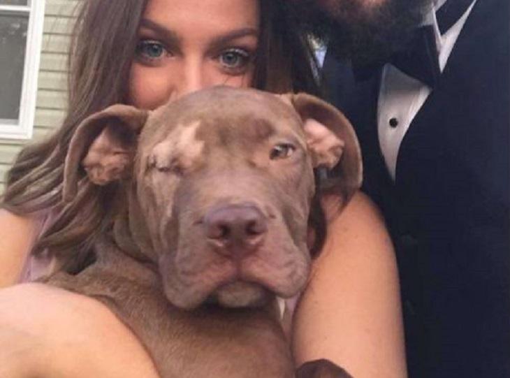 Riddick, il cane pitbull salvato dopo un incidente, trova casa (VIDEO)