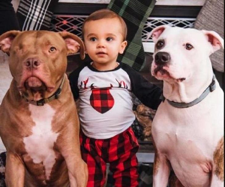 riddick cane adozione famiglia