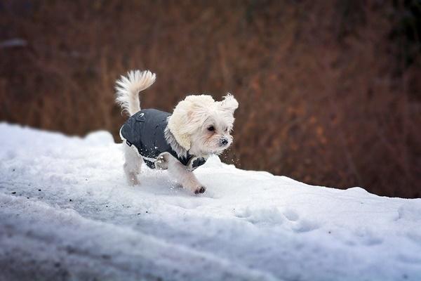 cappotto per cani di taglia piccola