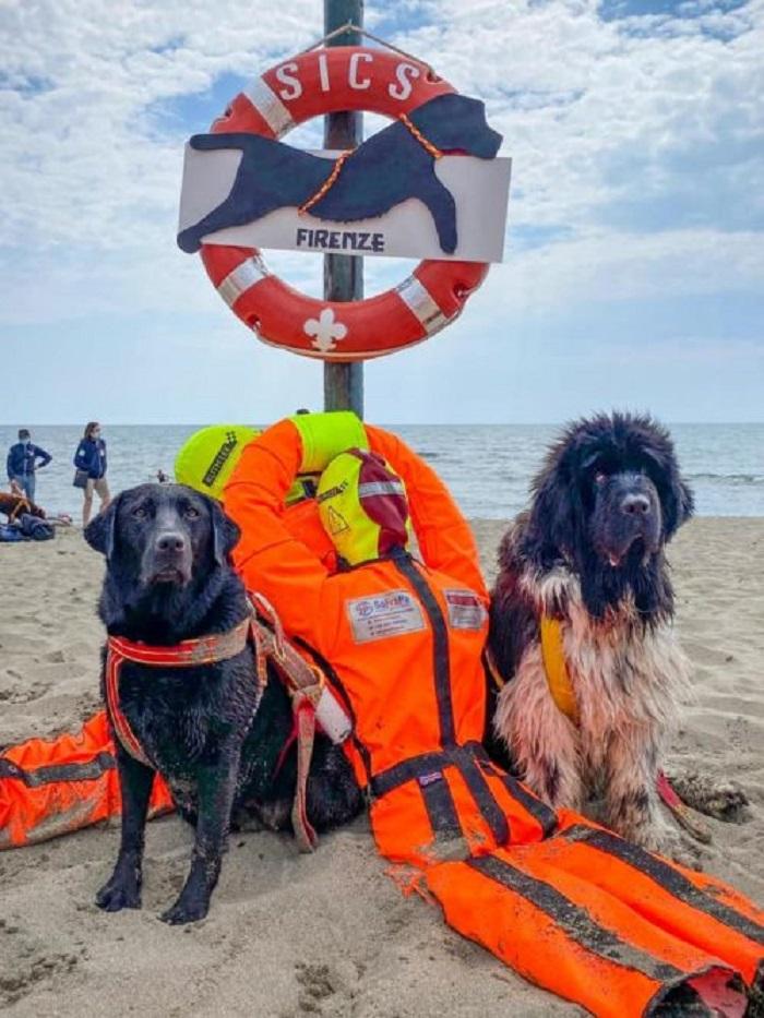 cani salvataggio mare