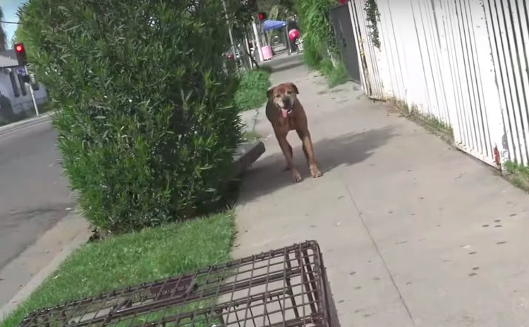 cane soccorso pumbaa