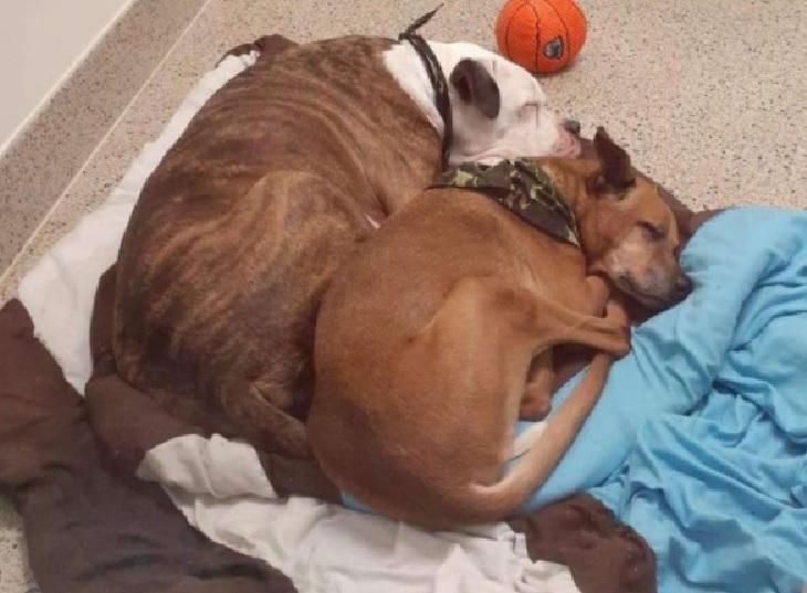 Schwabo, il cane che spera di incontrare il suo migliore amico (VIDEO)
