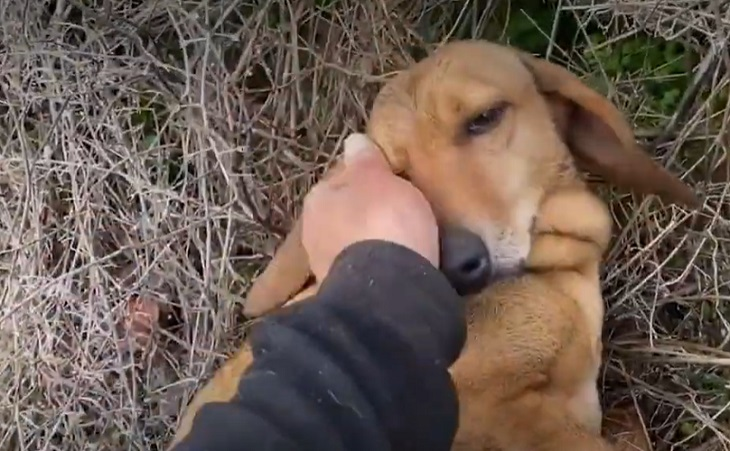 smart cane amore takis