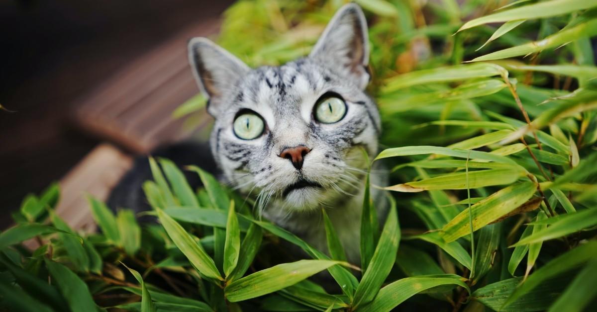 I cani possono mangiare l'erba gatta o gli fa male?