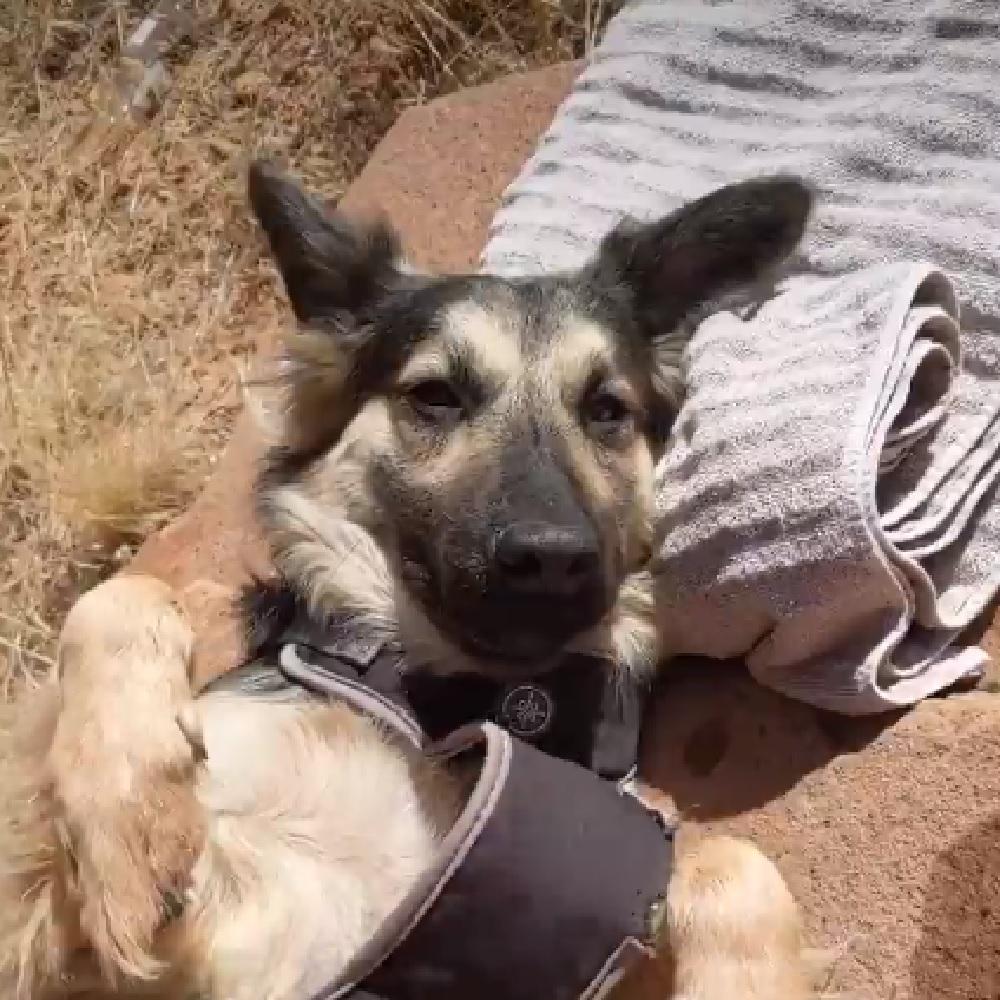 sunny cane campeggio 4 giorni