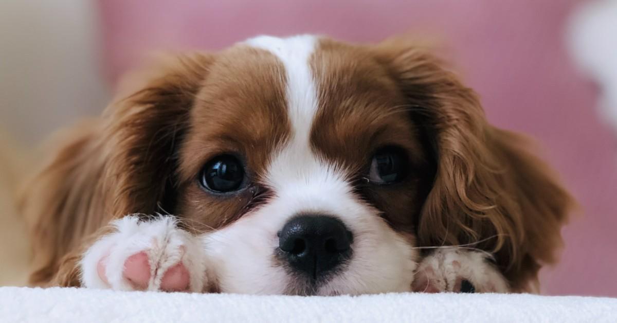 Cucciolo di cane lasciato solo: come reagisce e come farlo stare calmo