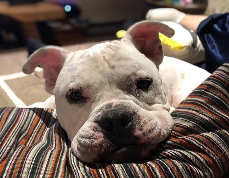 tonka cane adozione naja