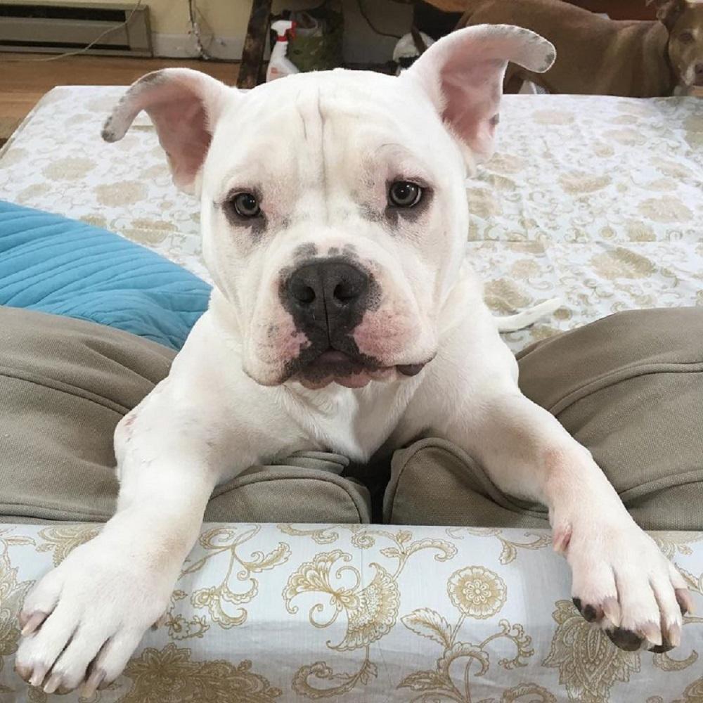 tonka cucciolo operazione veterinari