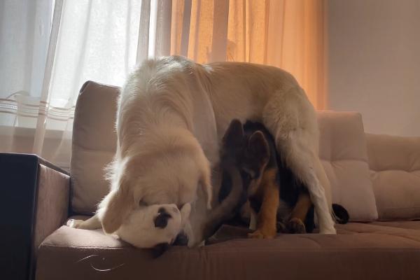 Tre amici giocano insieme e insieme si divertono (VIDEO)
