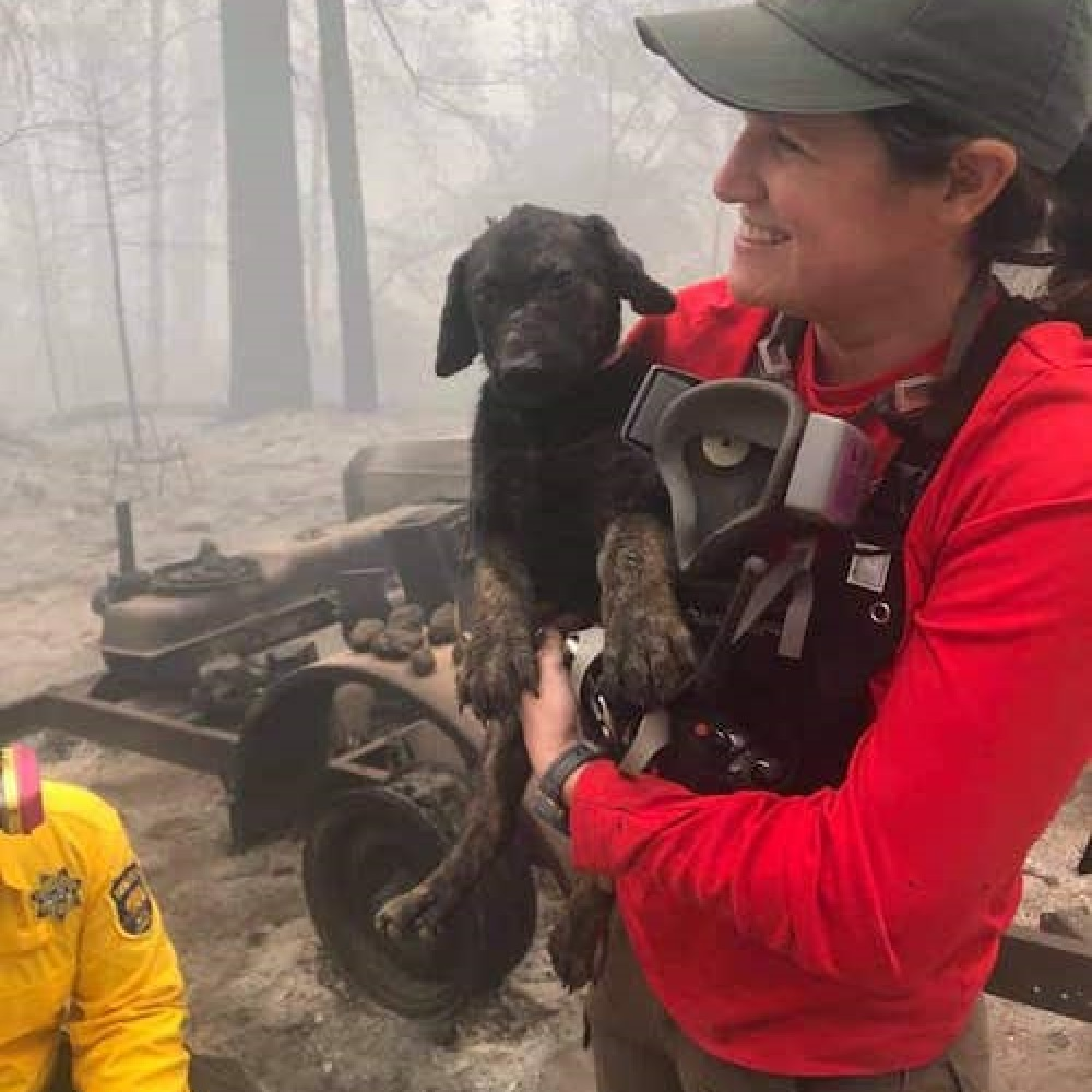 trooper cucciolo vigili salvataggio