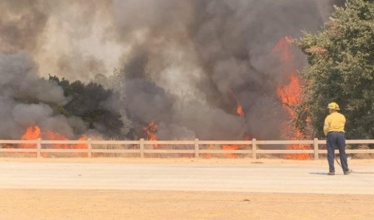 Trooper, il cucciolo che è fuggito durante un brutto incendio (VIDEO)