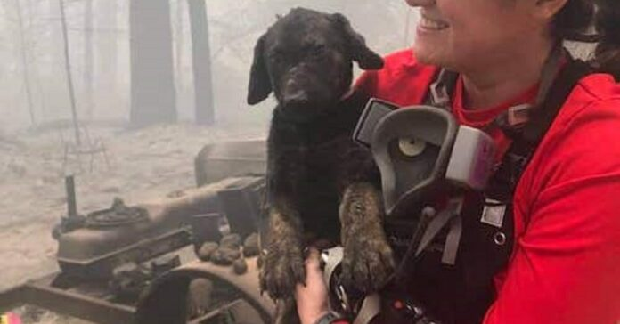 trooper cucciolo fugge durante incendio viene salvato