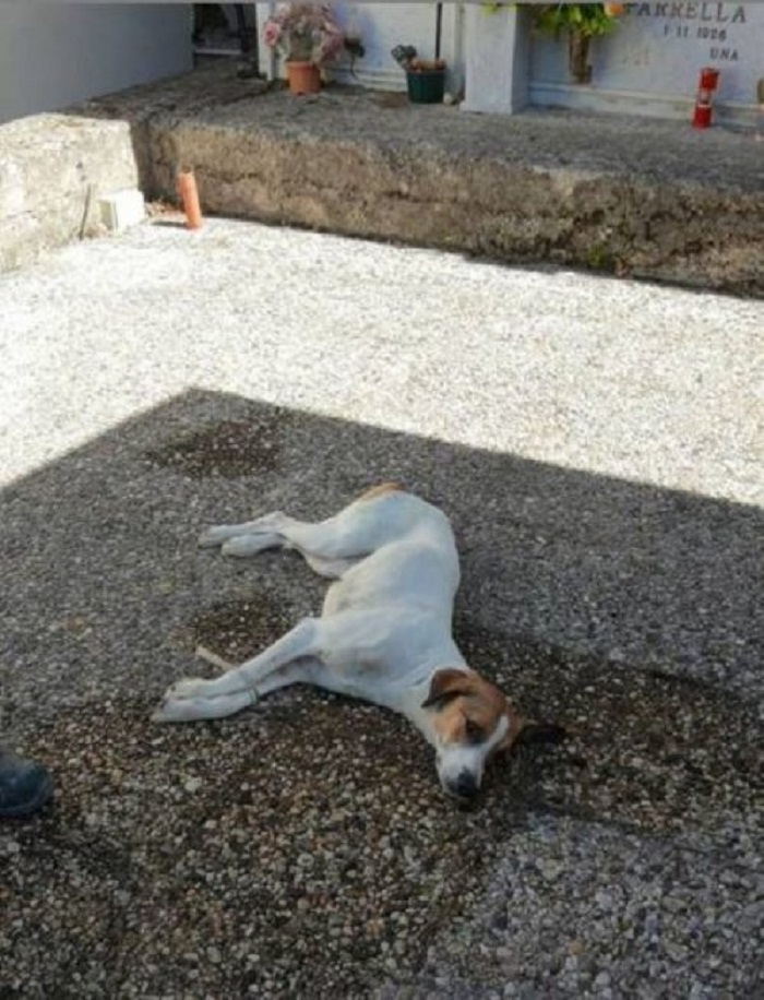 benevento cane legato