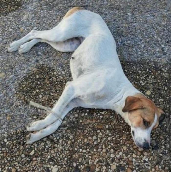 Trovato un cagnolino abbandonato e legato in un cimitero a Benevento (FOTO)