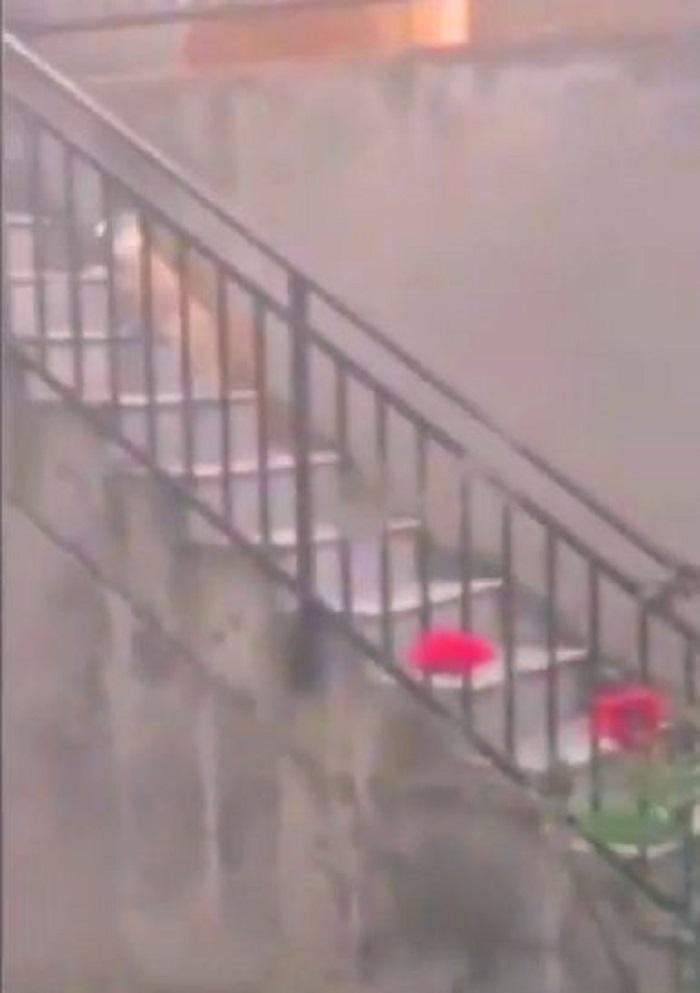 gatto sale scale