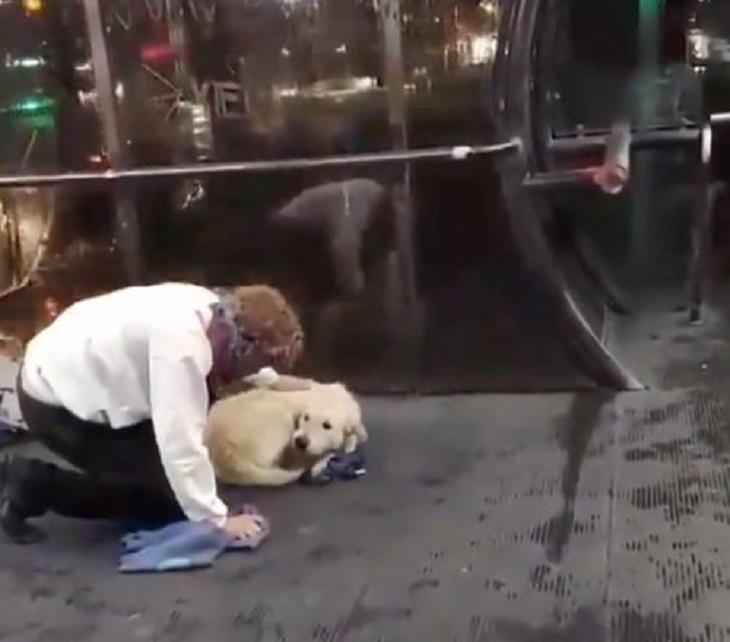cane randagio freddo stazione