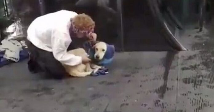 cane randagio infreddolito riceve regalo giacca