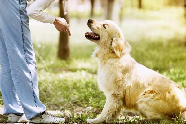 Come addestrare il cane in meno di una settimana e in casa: tutti i metodi