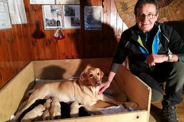 Addio a Moon, il Labrador eroe del terremoto di Amatrice che cercò i dispersi