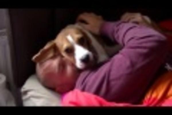 Questo dolcissimo Beagle Lola rivede il suo padrone (VIDEO)