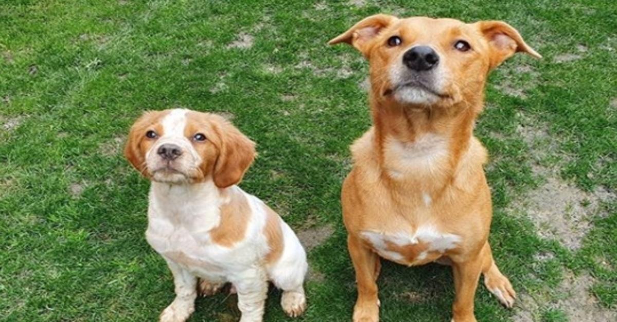 Billie e Seymour, i due cagnolini che spiano la loro mamma dallo spioncino