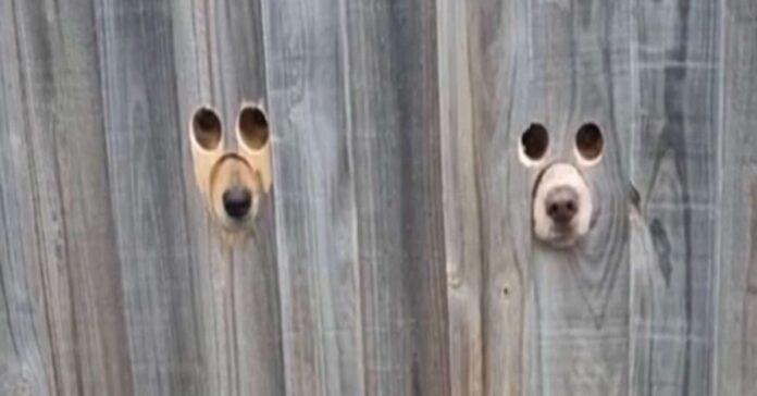 cagnolini osservano dallo spioncino