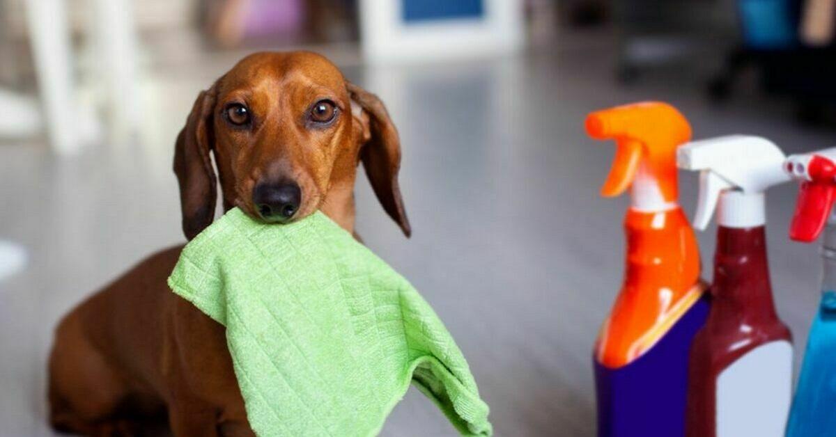 cane e detersivi
