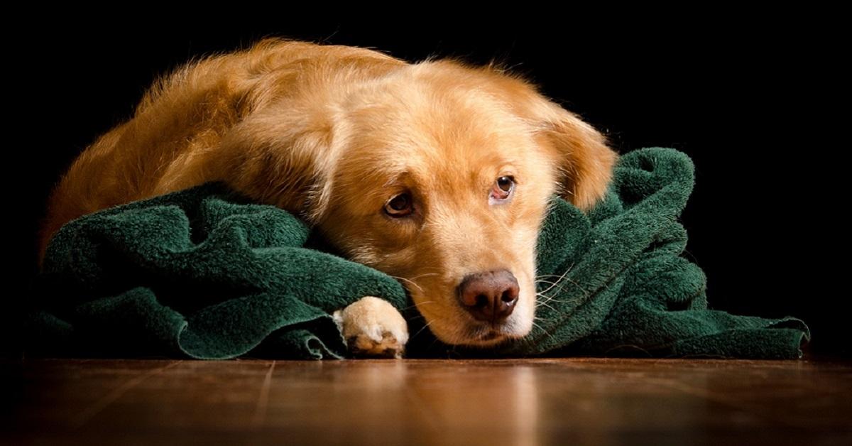cane triste e sconsolato