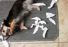 cane su tappetino
