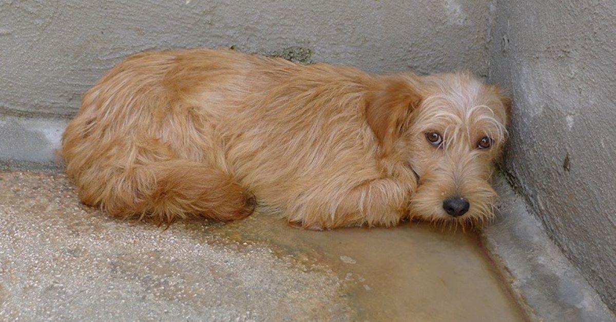 Cani, dove adottarli in Umbria: piccola guida