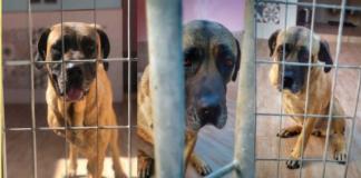Ohana cane da adottare a Trani, tre foto