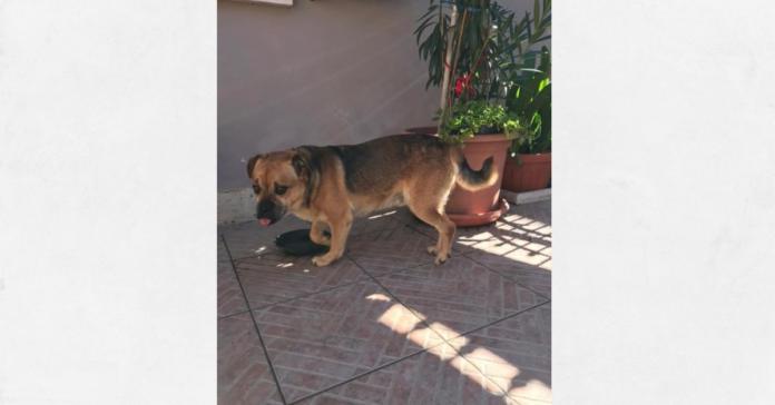 Bingo cane da adottare a Trasacco