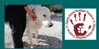 Leyla cane da adottare con logo trasacco