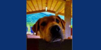 Brian cane da adottare primo piano