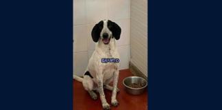 Granito, cane da adottare a Bovalino